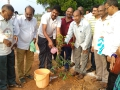 Plantation of saplings by Sri Govinda Raju Circle Inspector of Police Sarpavaram.