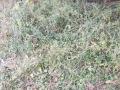 11-EnvironmentCleanliness-KahenaShahValiDargah-Tuni-30122019