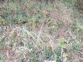 12-EnvironmentCleanliness-KahenaShahValiDargah-Tuni-30122019
