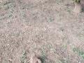 13-EnvironmentCleanliness-KahenaShahValiDargah-Tuni-30122019