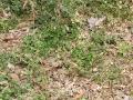 18-EnvironmentCleanliness-KahenaShahValiDargah-Tuni-02012020