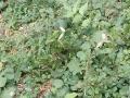 20-EnvironmentCleanliness-KahenaShahValiDargah-Tuni-02012020