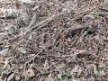 22-EnvironmentCleanliness-KahenaShahValiDargah-Tuni-02012020