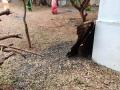25-EnvironmentCleanliness-KahenaShahValiDargah-Tuni-02012020
