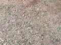 26-EnvironmentCleanliness-KahenaShahValiDargah-Tuni-02012020
