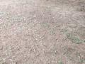 28-EnvironmentCleanliness-KahenaShahValiDargah-Tuni-02012020