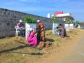 Volunteers painting tree guards