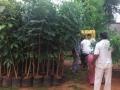 Second phase of plantation in AU campus. DR G S N Raju, Vice Chancellor Prof,  V Uma Maheswara Rao , Registrar, Prof E A Narayana, Rector, AU Arts College Principal, Prof M. sundara Rao, Dr Ananda Kumar Pingali, UARDT Convener and trust volunteers have participated
